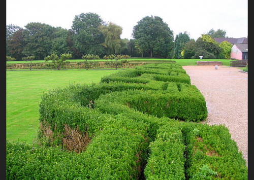 Photo of a labyrinthine hedge dividing a grass yard from a gravel path