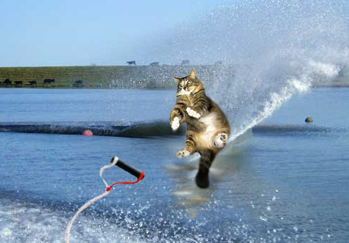 Waterskiing cat soaring above the water